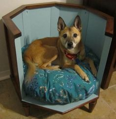 Cute off the ground dog bed!