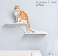 I like the idea of cat shelves, and these are cool! However, I'm not sure how weird it is to have cats running all over your walls.  Anyone have any cat shelves?  What do you think of them?