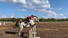 Cute Horses, Horse Love, Beautiful Horses, Horses Jumping Videos, Horse Videos, Horse Riding Tips, English Riding, Appaloosa Horses, Cute Animal Photos