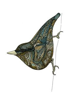 """""""Nuthatch"""" by Margo Yacheshyn 