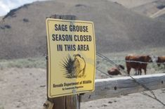 BLM Leadership Coddles Hostile and Law Breaking Nevada Ranchers like Cliven Bundy