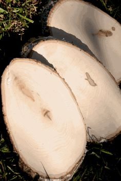 """Wood Tree Slices with Bark ( 7-10.5"""") An option for buying them if you want them all the same general thickness."""