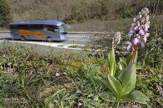 Barlia e Autostrada ligure