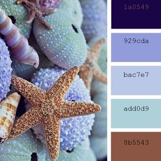 beach and coast tones color palettes