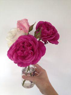 Blackberry nip, Margaret Merrill and true love all from my garden My Flower, Flowers, Blackberry, True Love, Garden, Decor, Real Love, Garten, Decoration