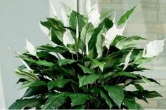 Uz pomoć ovih namirnica vaše biljke će biti negovanije i mnogo lepše Herb Garden, Home And Garden, Plant Care, House Plants, Beautiful Flowers, Plant Leaves, Herbs, Colorado, Tropical