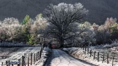 A Frosty Sunrise on Sparks Lane Photo by Kellie Walls Sharpe — National Geographic Your Shot