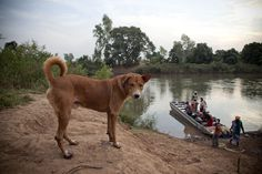 The River Gambia, Kedougou, Senegal © Jason Florio - 'River Gambia Expedition - 1000km source-sea African odyssey'