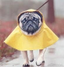 T-shirt, legging, hoodie for Pug lovers. Order here: https://www.sunfrog.com/JohnyD/pug-shirts