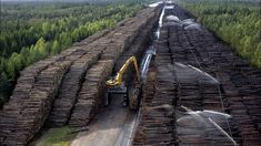 The World's Largest Wood Stockpile Is Absolutely Insane