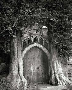 Casa en el arbol , pero adentro del arbol . En un arbol de mil años de edad , construyeron la mas fantastica vivienda que se haya visto . . .