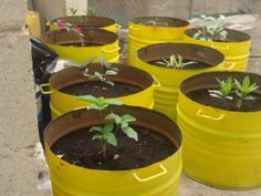 """oil drum"" tree planter - Google Search"