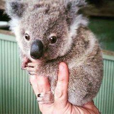 A handful of cuteness