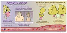 Enfermedad de Addison vs. Hiperaldosteronismo primario