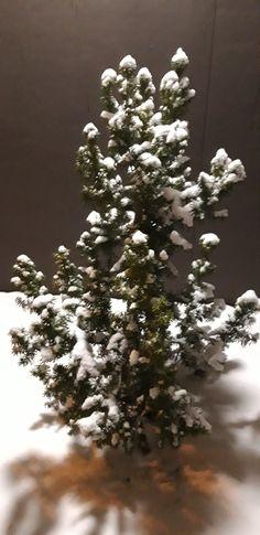 Christmas Tree, Holiday Decor, Outdoor, Home Decor, Teal Christmas Tree, Outdoors, Decoration Home, Room Decor, Xmas Trees