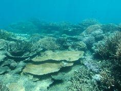 Nuevas imágenes muestran que la Gran Barrera de Coral no se está reparando a si misma como debería - http://www.renovablesverdes.com/nuevas-imagenes-muestran-que-la-gran-barrera-de-coral-no-se-esta-reparando-a-si-misma-como-deberia/