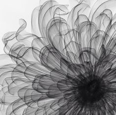 """"""" X-Ray Photography by Nick Veasey """" I will try to duplicate using alcohol ink. Tatoo Flowers, Deco Nature, Flower Art, Flower Power, Beautiful Flowers, Art Photography, Flower Photography, Artwork, Artsy"""