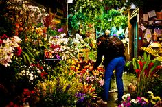 Shopping for flowers at Brattle Square Florist, #Harvard_Square