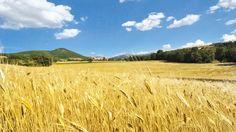"""Fogliano di Cascia - Termine prediale da Foiianum o Fulianum. Fogliano è una villa di transito sita nella parte meridionale dell`altopiano che completa il sistema agricolo a nord di Cascia, risultato dalla trasformazione protrattasi nel sec. XVI dal precedente """"sistema"""" difensivo. Sorge sull`antico itinerario da Cascia per Ocricchio e per il Piano di Santa Scolastica, su cui vigilava il vicino castello di Frènfano. http://www.lavalnerina.it/luoghi/122/Fogliano.html"""