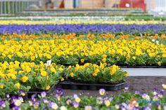 Vrtnarija in cvetličarna Grdadolnik Plants, Planters, Plant, Planting