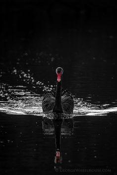 Black Swan - Slender Female // by George