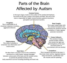 autism facts 2