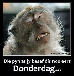 the pain when you realise it's only Thursday today. Humor Animal, Thank You Gifs, Afrikaanse Quotes, Interesting Animals, Son Quotes, Funny Messages, Morning Wish, Love Pet, Friend Pictures