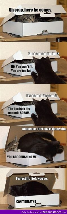 I'm not a cat person but this made me lol