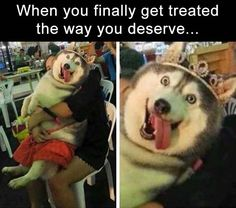 Lol funny dog