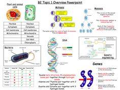 A revision poster for topic 1 edexcel Biology unit Gcse Biology Revision, Igcse Biology, Gcse Math, Biology College, Biology Classroom, Teaching Biology, Science Notes, Science Education, Life Science
