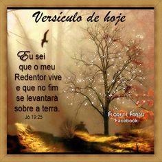 Flores e frases: JÓ 19:25