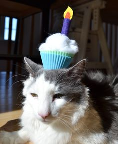 Birthday Cat Hat Exercise Wheel Kittens Cutest Cute Cats