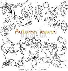 Image result for autumn leaves drawing