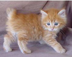 Orange kittens <3