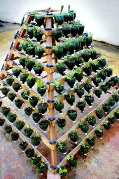 soda bottles into a garden--wow, this is amazing--even auto-watering.  I think I might use this as my inspiration for my indoor aquaponic salad bar.  Of course my will be flat against the wall.