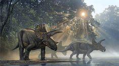 Raúl Martín: Triceratops