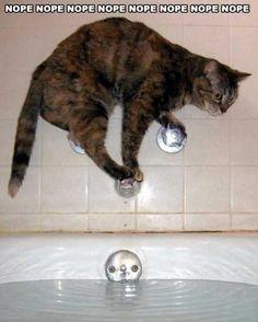 Bath? I don't think so...  #cat #bath