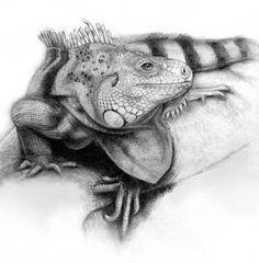 iguana png - Поиск в Google