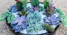 Saiba como montar um mini jardim de cactos e suculentas | Jardim das Ideias STIHL - Dicas de jardinagem e paisagismo