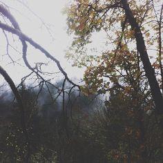 Rainy trail run set me right.