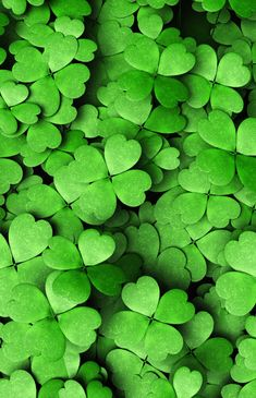 Four leaf green clover Green Wallpaper, Nature Wallpaper, Wallpaper Backgrounds, Iphone Wallpaper, Lucky Wallpaper, Dark Green Aesthetic, Aesthetic Colors, Green Theme, Green Colors