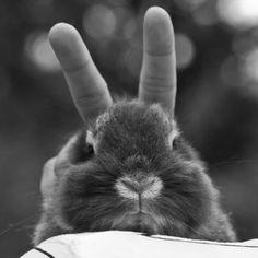... au pays des lapins | Une bonne fête de Pâques