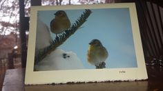 999 American Goldfinch  winter scene  Greeting Card with a Matching Envelope Perfect Blank All Occasion Note Card by BuyNow1Photo on Etsy