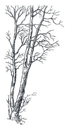 Five Types of Hardwood Trees to Use for Firewood - Oak, Cherry ...