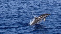 Jetzt wird es fischig in der EU!Getrieben von Gier plündern Fischereikonzerne das Meer aus. Sie fangen mehr Fisch, als aufwachsen kann. Zu kleine und junge Fische werfen sie wie Müll ins Meer zurück. Es kommt jetzt auf uns an: Fordern wir die Fischereiminister in der EU auf, endlich zu handeln.