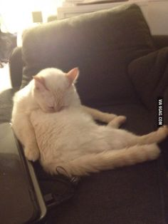 Cat was grooming then dozed off