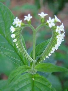 Nature at its Best Heart Pictures, Heart Images, Heart In Nature, Heart Art, I Love Heart, Happy Heart, Tiny Heart, Unusual Flowers, Beautiful Flowers