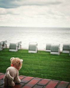 My son's little pet Leo the Lion is looking over the wide wide world and endless sea... #leothelion #leo #pet #lion #sea #nordsee  #northsea  #beach #beachchair  #view #wilhelmshaven #friesland #cute  #mechtravcook  #snapseed  #sonyalpha  #alphaaddicted  #SonyImages  #alpha_58  #wanderlust  #travel  #traveler  #instatravel  #landscape  #travelblog  #germany  #instagood  #picoftheday  #photooftheday  #follow