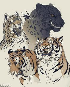 big cats by akreon on DeviantArt - Wolf zeichnung - Art Animal Sketches, Animal Drawings, Cool Drawings, Arte Furry, Furry Art, Big Cats Art, Cat Art, Cat Anime, Tiger Art