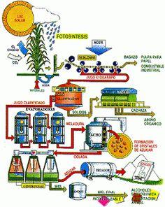 Proceso Productivo del Azúcar